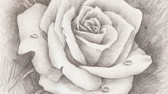 570x320 Pencil Sketches Of Roses Best Ideas About Rose Drawings