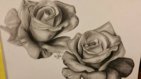 570x320 Rose Flower Drawings In Pencil Flower Drawing Rose Drawing Artisan