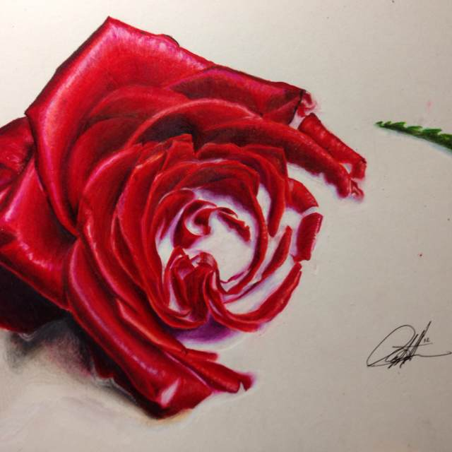 640x640 Roses Are Ff0000 Colored Pencil Drawing Art