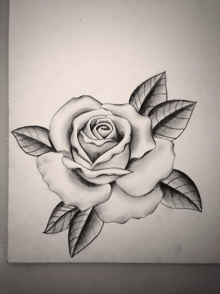 736x981 For Rose Drawing Tattoo