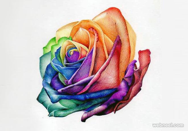 660x458 Rose Flower Drawing 2