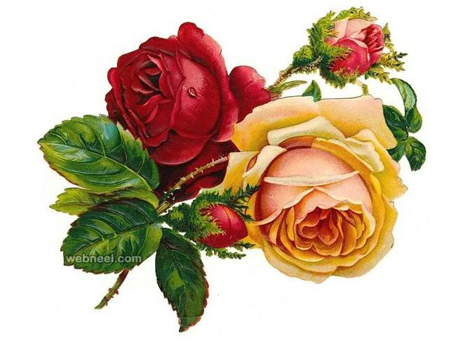 660x492 Rose Flower Drawing 3