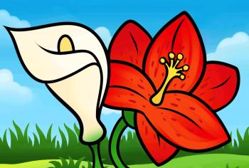 350x236 Flowers