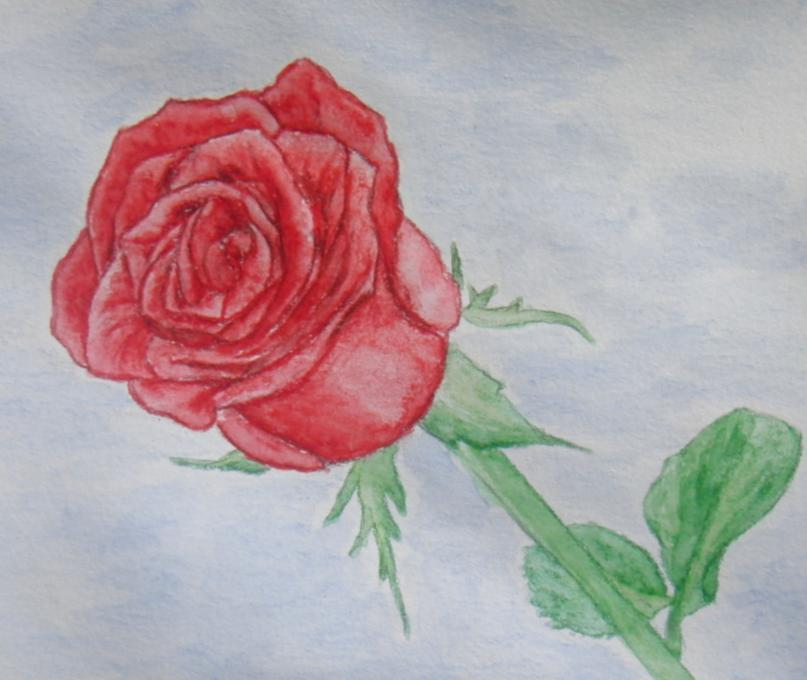 807x680 Rose. Flowers. Drawings. Pictures. Drawings Ideas For Kids. Easy