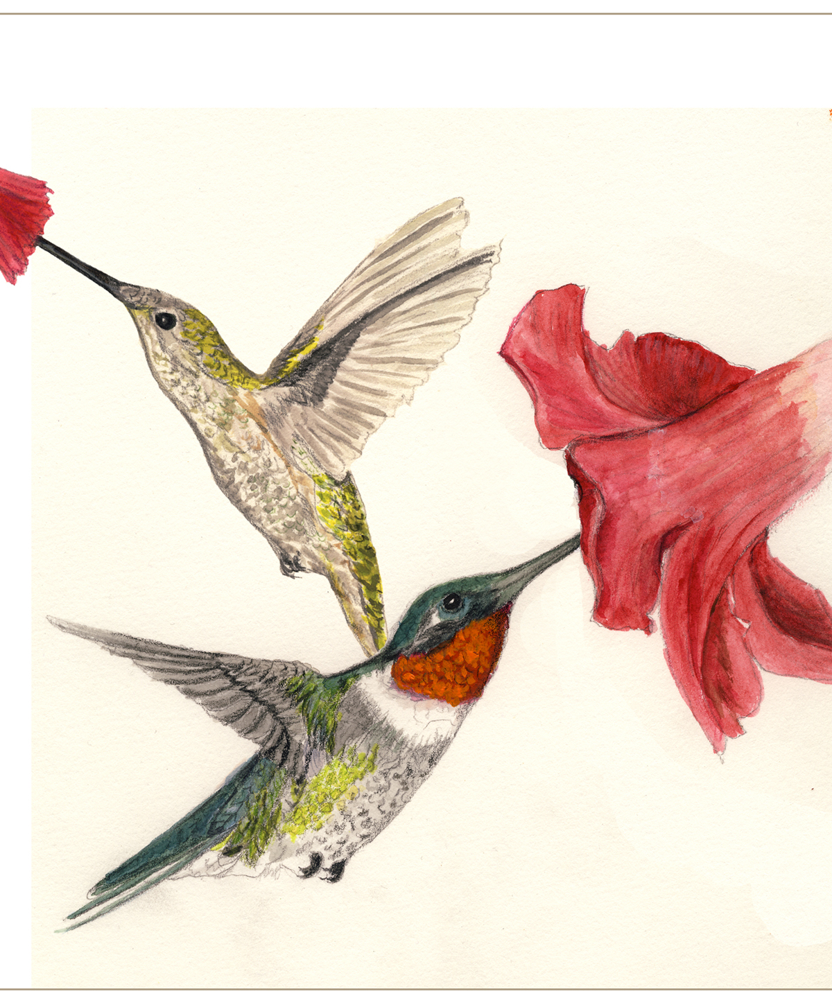 1200x1430 Drawing On The Natural World Humming Hummers