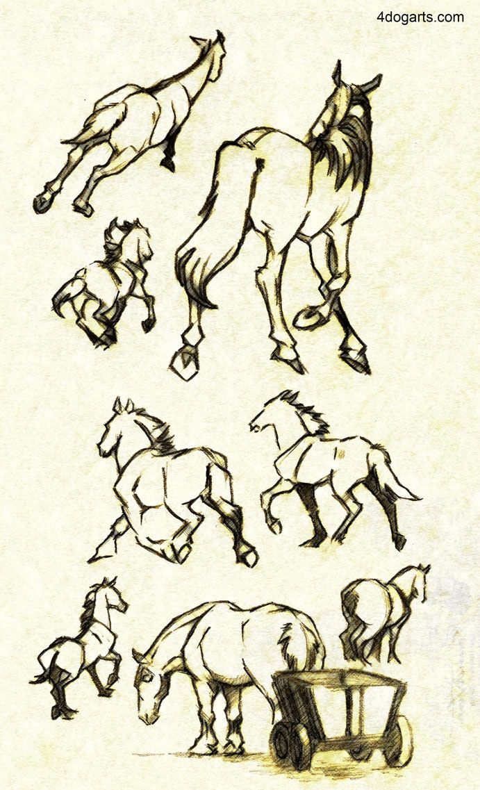 691x1137 Horses Running Away Sketches Htdhorses Sketches