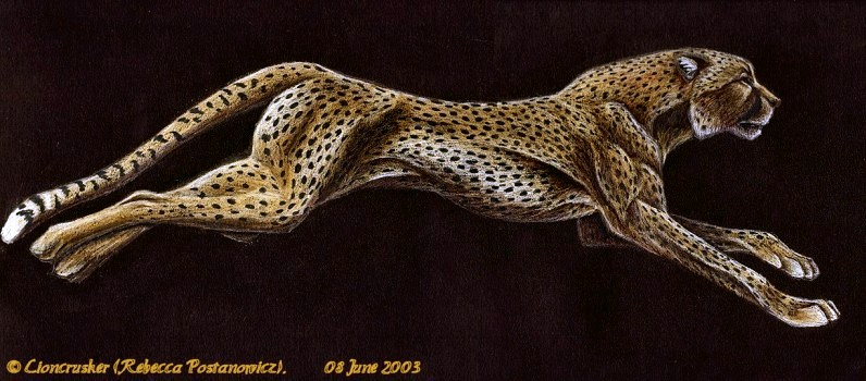 796x350 Cheetah Running By On @