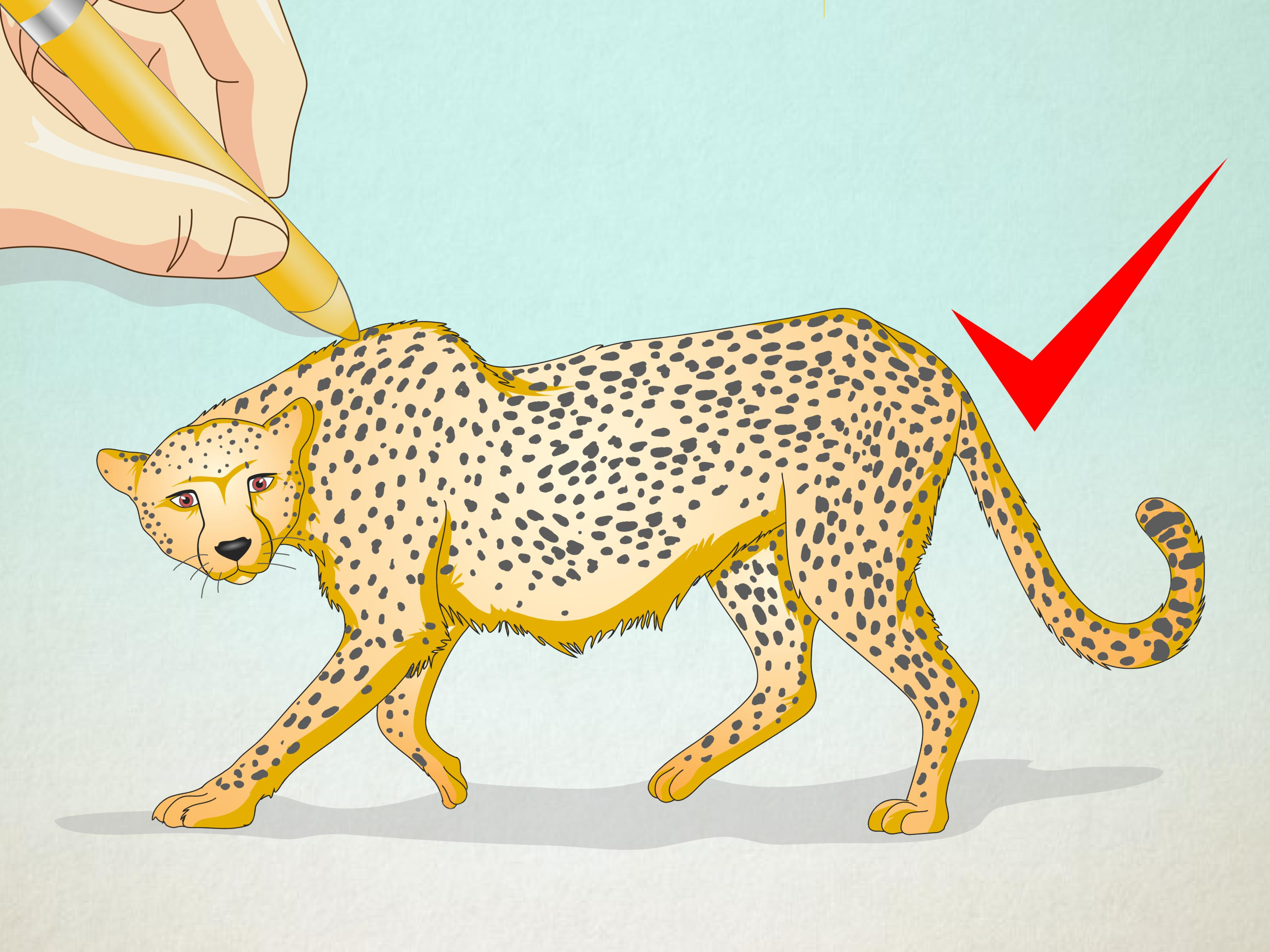 3200x2400 How To Draw A Cheetah 13 Steps (With Pictures)