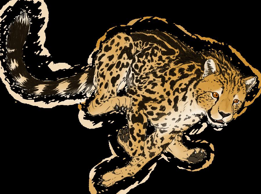 900x671 King Cheetah By Kalambo On Terrestrial