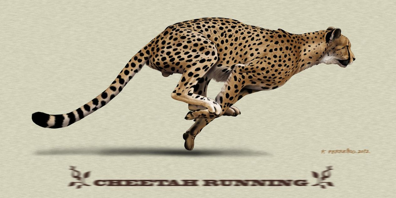 1264x632 Cheetahs Running Drawing