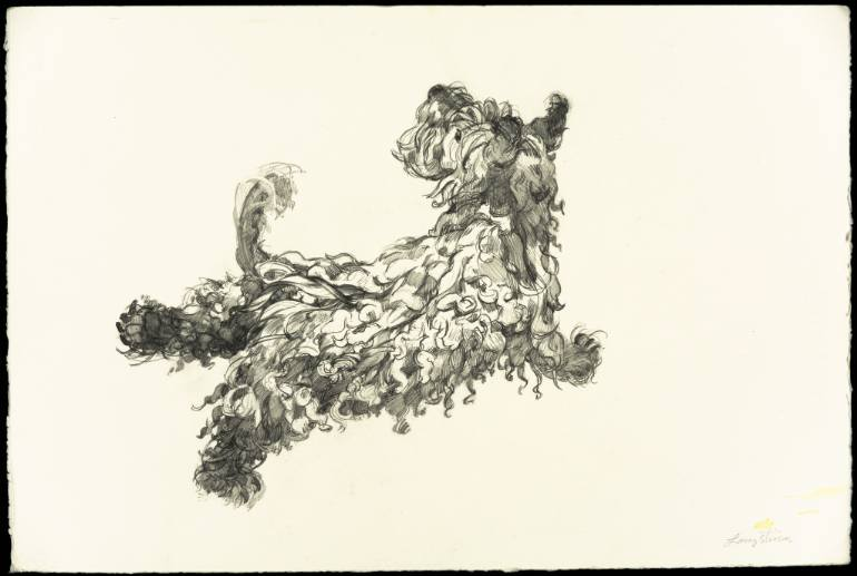 770x517 Saatchi Art Running Scottie Dog Looking Back Drawing By Lacey Stinson