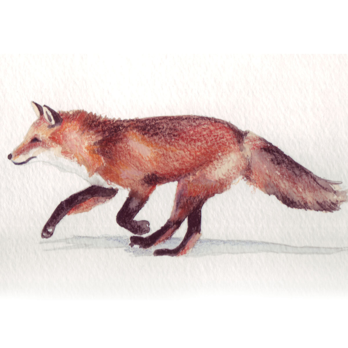 1200x1200 Running Red Fox Illustration Red Fox, Foxes And Illustrators