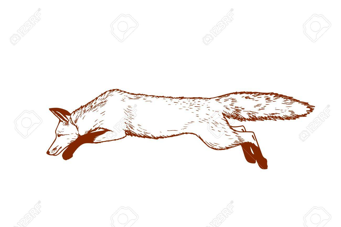 1300x866 Vector Card With Hand Drawn Running Fox Made With Pen And Ink