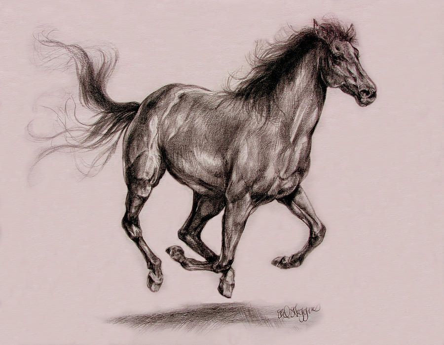 Horse Running Drawing Running Horse Drawing at GetDrawingscom Free for