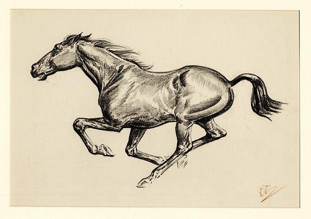 638x450 Running Horse Drawing Feel The Wind In Your Face Pretty Horses