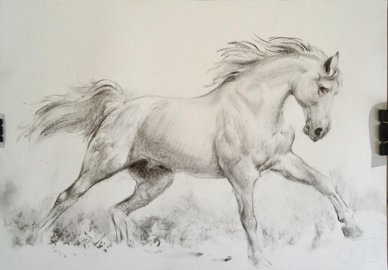 Horse Running Drawing Running Horses Drawing at GetDrawingscom Free for