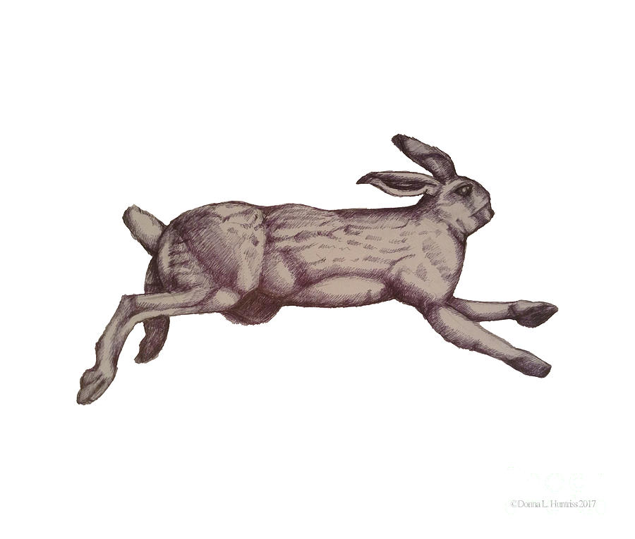 900x765 Running Bunny Jan 27 Drawing By Donna Huntriss