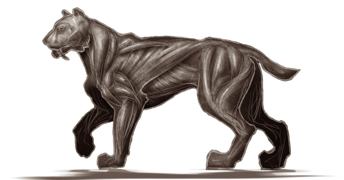Sabre tooth tiger drawing at getdrawings free for personal use 1200x630 final 3rd year project anatomy of a sabre tooth tiger ccuart Image collections