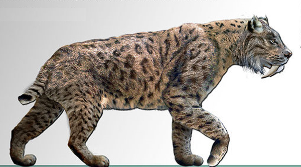 Sabre tooth tiger drawing at getdrawings free for personal use 600x333 sabre tooth cat ccuart Image collections