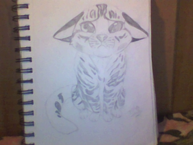 640x480 Sad Cat Drawing I Got To Fix The Tail And Give It More Detail (2