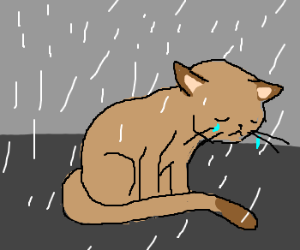 300x250 Sad Cat Is Rained Upon