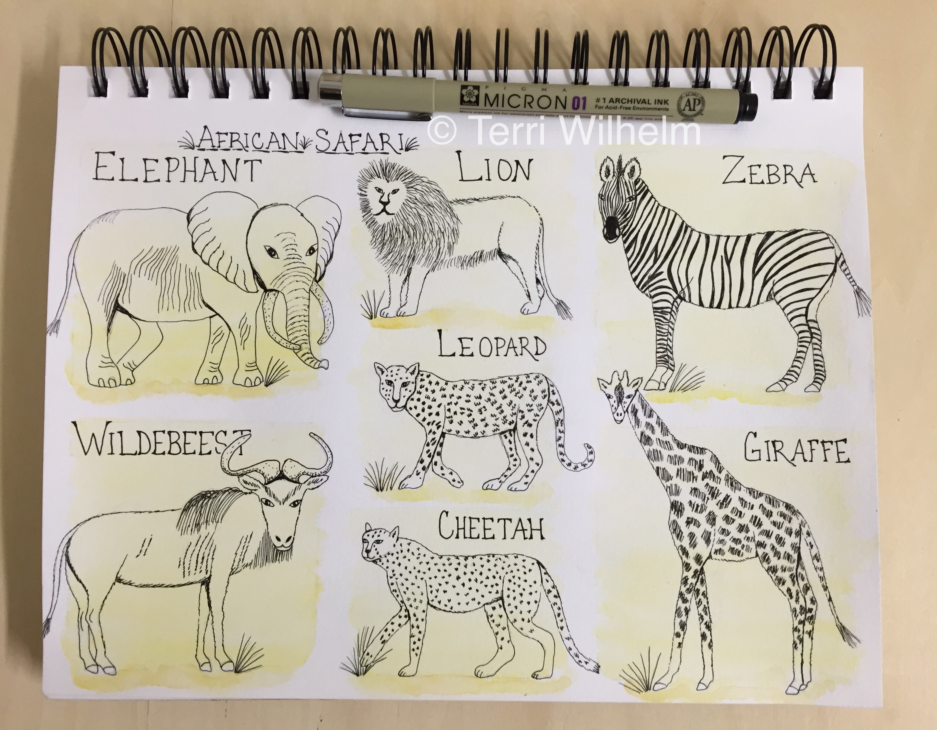 3140x2448 Week 3 Weekly Drawings African Safari Terri's Notebook