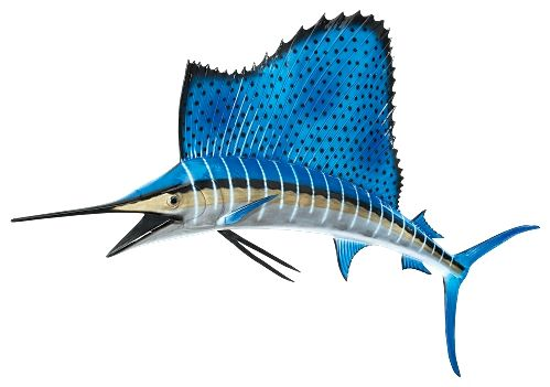 499x351 Sailfish Drawing Photo And Wallpaper. Cute Sailfish Drawing Pictures