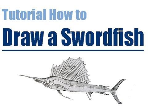 480x360 Tutorial How To Draw A Sailfish Step By Step Wie Man Einen