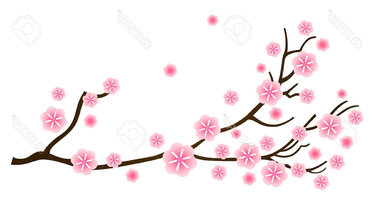 Sakura branch: what is, how to do massage, features of the procedure 89