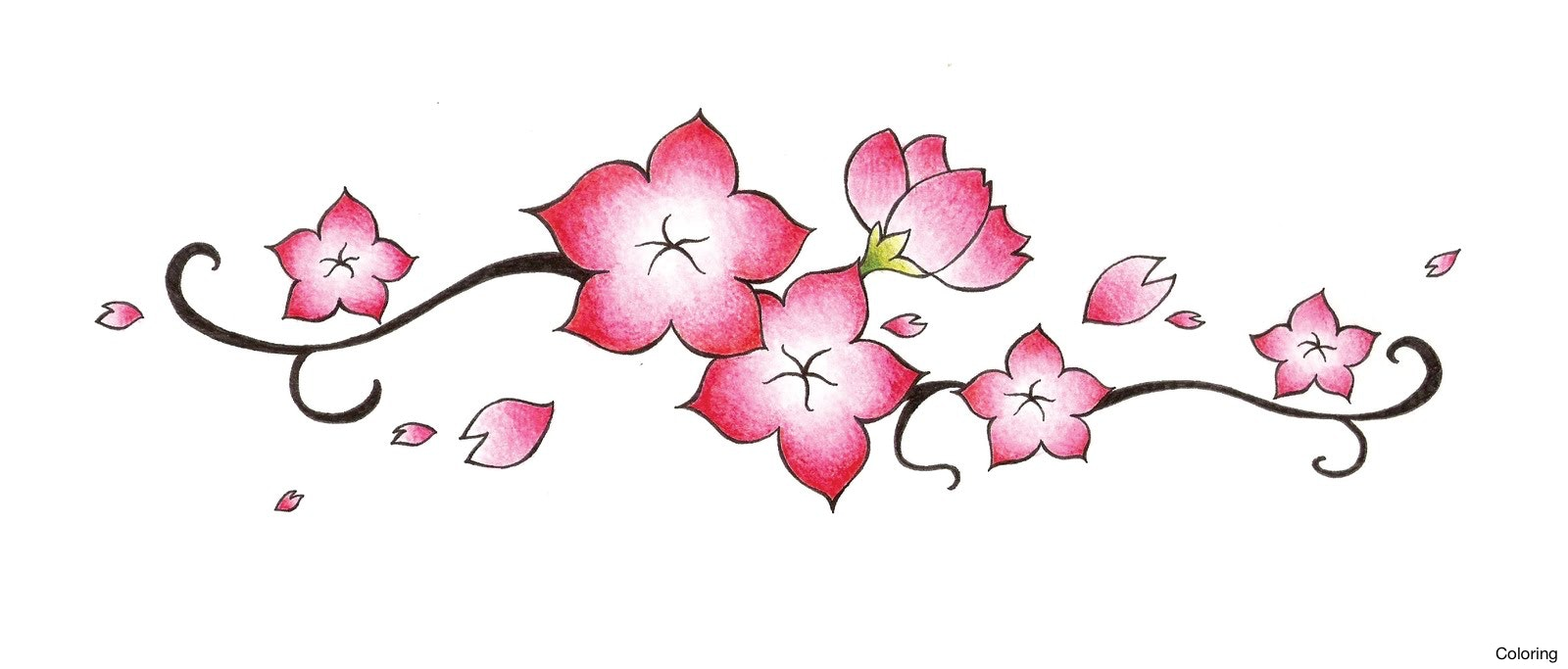 1600x683 Cherry Blossoms Drawing Blossom Best Images Collections Hd