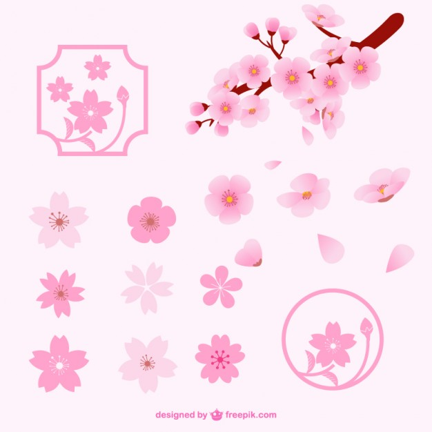 626x626 Different Cherry Blossom Flowers Vector Free Download