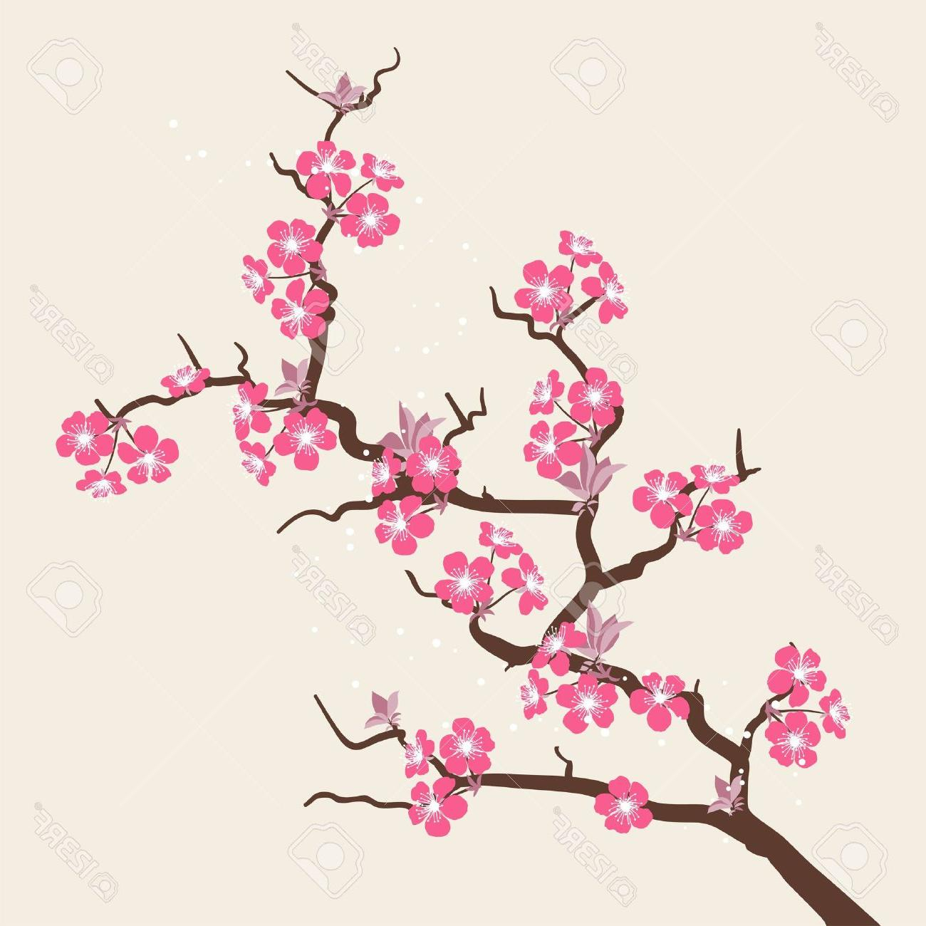 It is a photo of Rare Sakura Flower Drawing