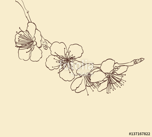 500x449 Blossoming Tree Flowers Line Art Hand Drawing. Spring Stylish