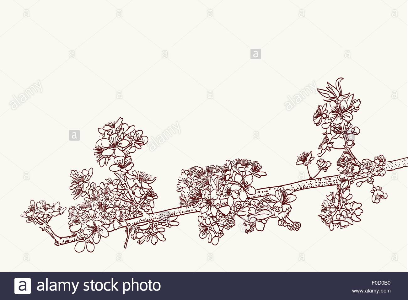 1300x956 Stylized Sakura Flowers Drawing In Two Colors Stock Vector Art