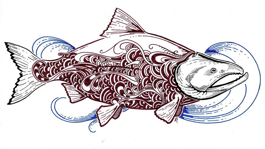 900x506 Sockeye Salmon Drawing By Marcus Cline
