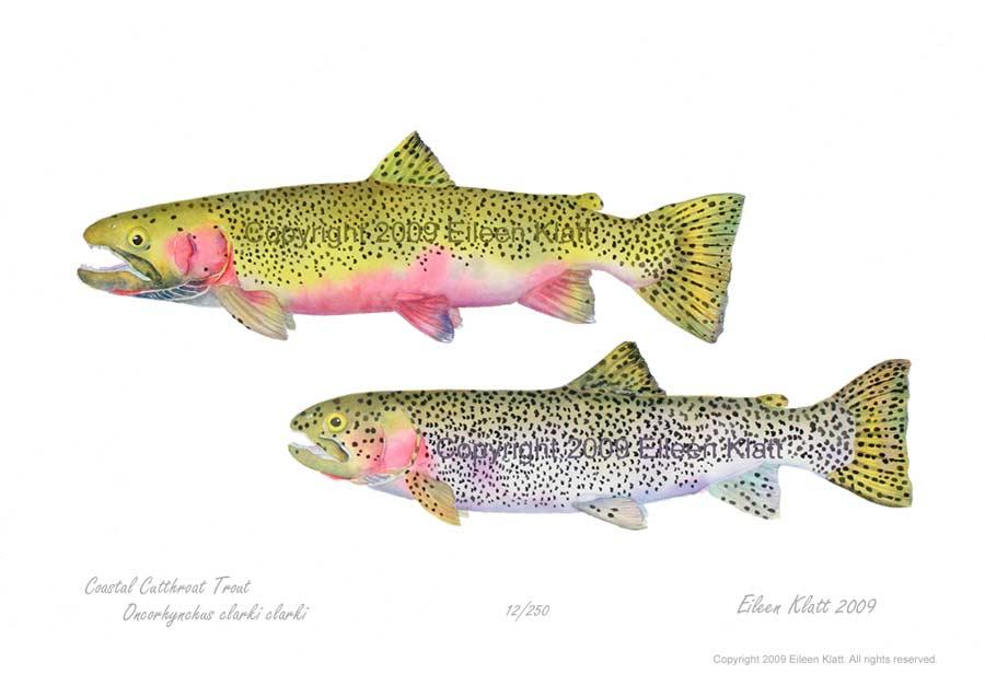 900x616 The Art Of Eileen Klatt New Fish, Old Favorites