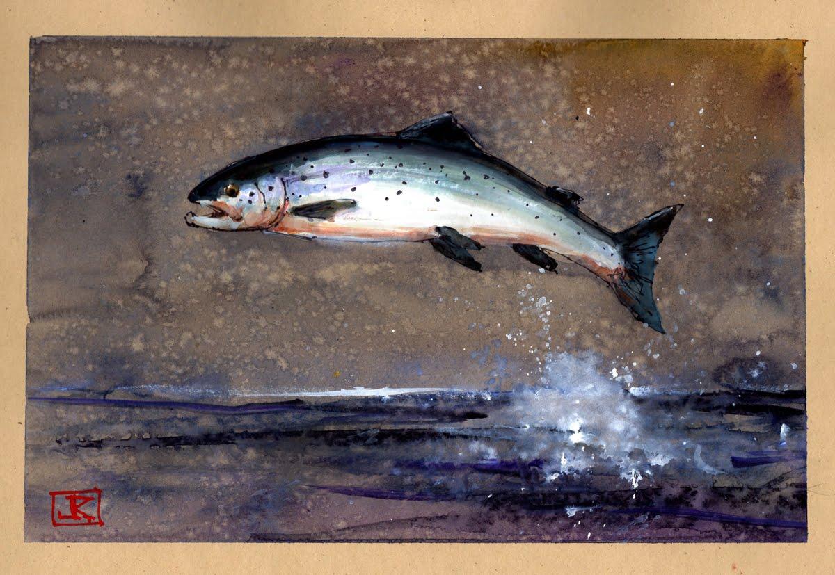 1200x827 Drawing Flies 365 Drawing Fish 52 37 Atlantic Salmon