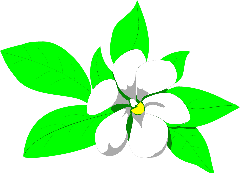 958x693 Magnolia Free Stock Photo Illustration Of A White Magnolia