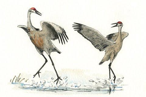 480x320 100 Paintings Challenge Sandhill Cranes