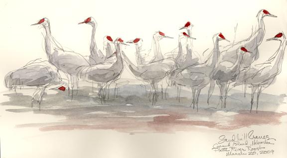 576x317 Drawing Nebraska's Sandhill Cranes Drawing The Motmot