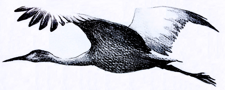 2833x1144 Sandhill Crane Migration