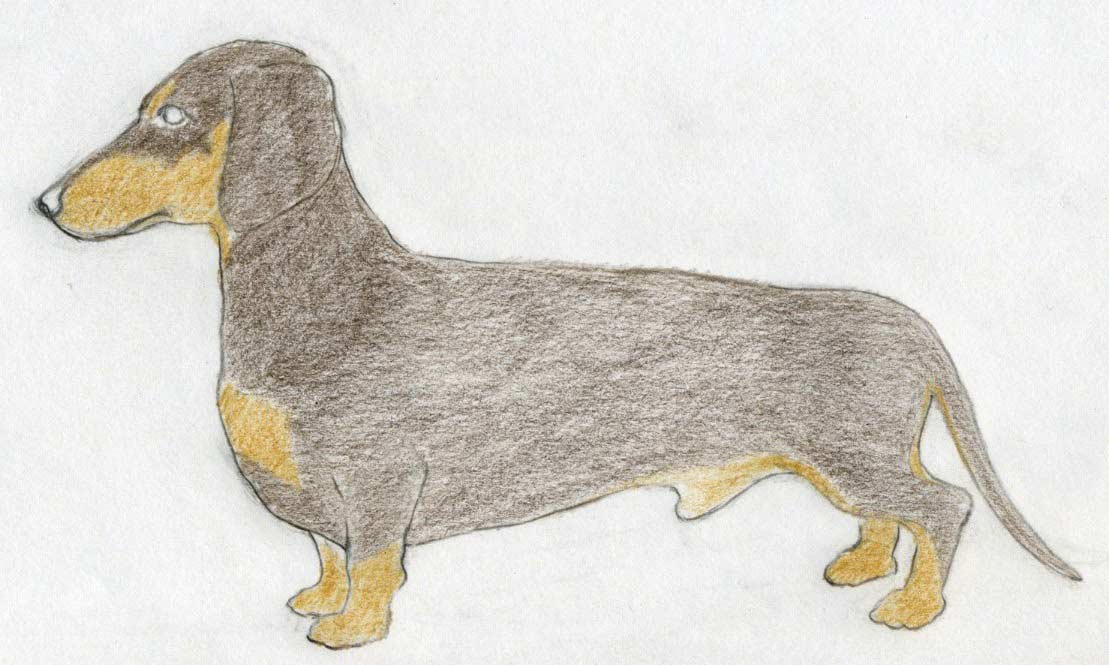 1109x665 To Draw Dog