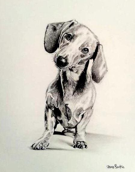 449x572 Drawing Sausage Dogs