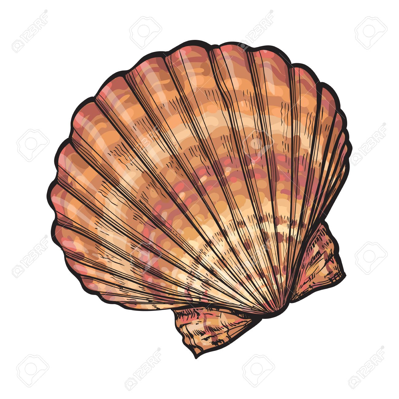 1300x1300 Colorful Scallop Sea Shell, Sketch Style Vector Illustration
