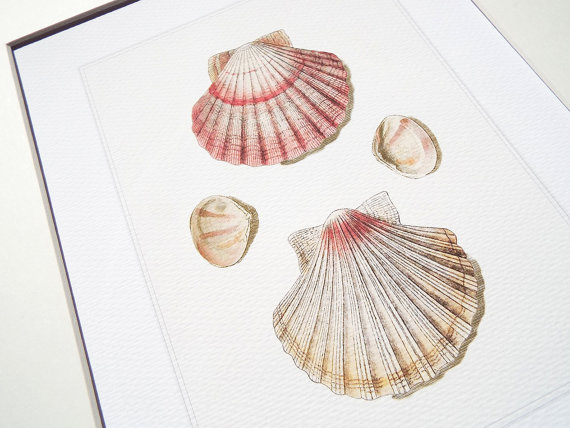 570x428 Dusty Pink Scallop Shell Study 1 Archival Print On By Paperwords11