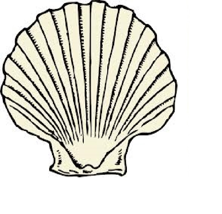 768x740 Scallop Shell Drawings Scallop Shells And Drawings