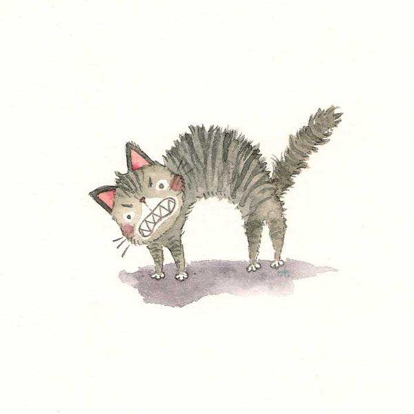 600x600 370 Best Katten Images On Cat Stuff, All Alone