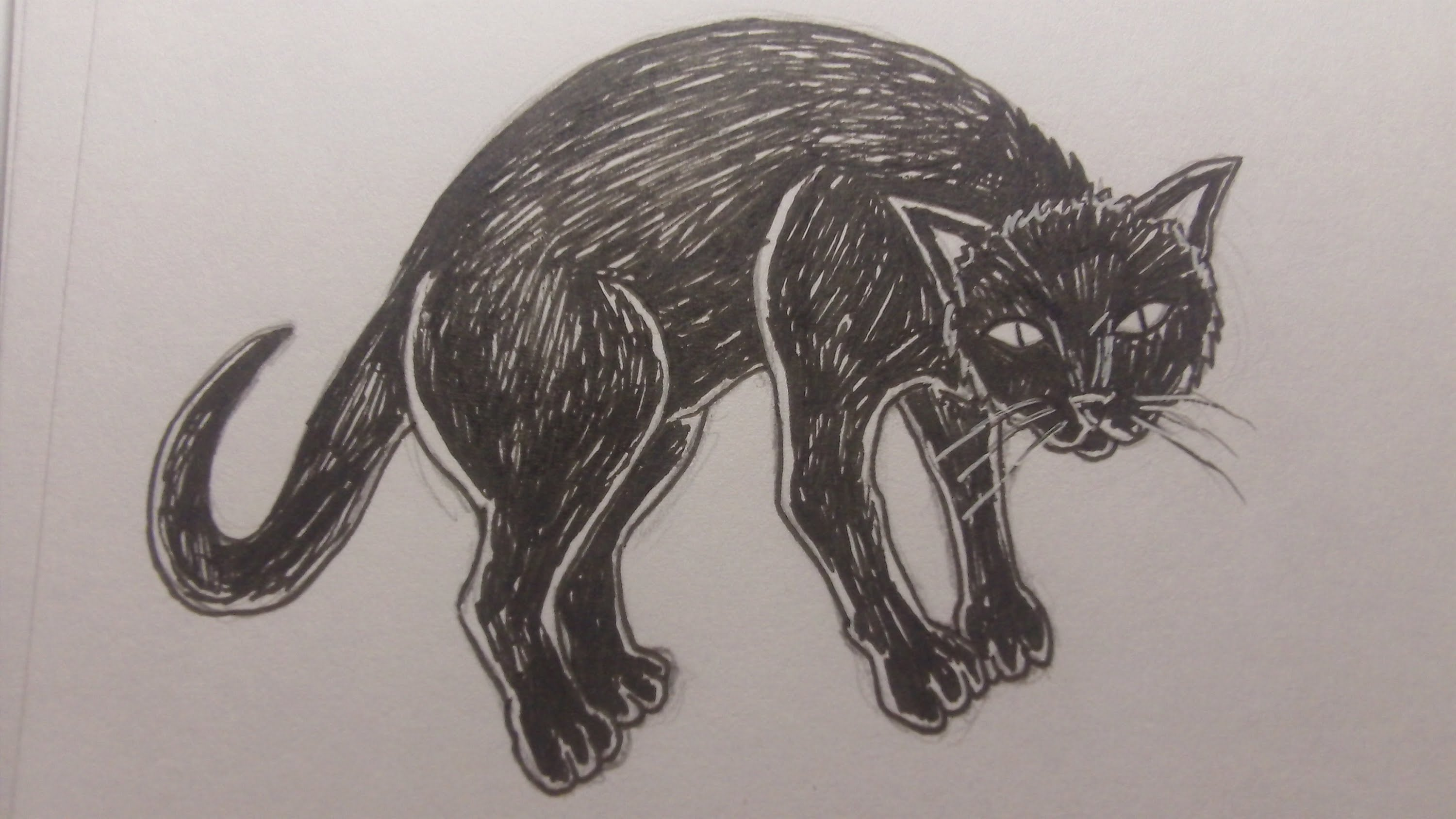 3000x1688 How To Draw A Black Cat
