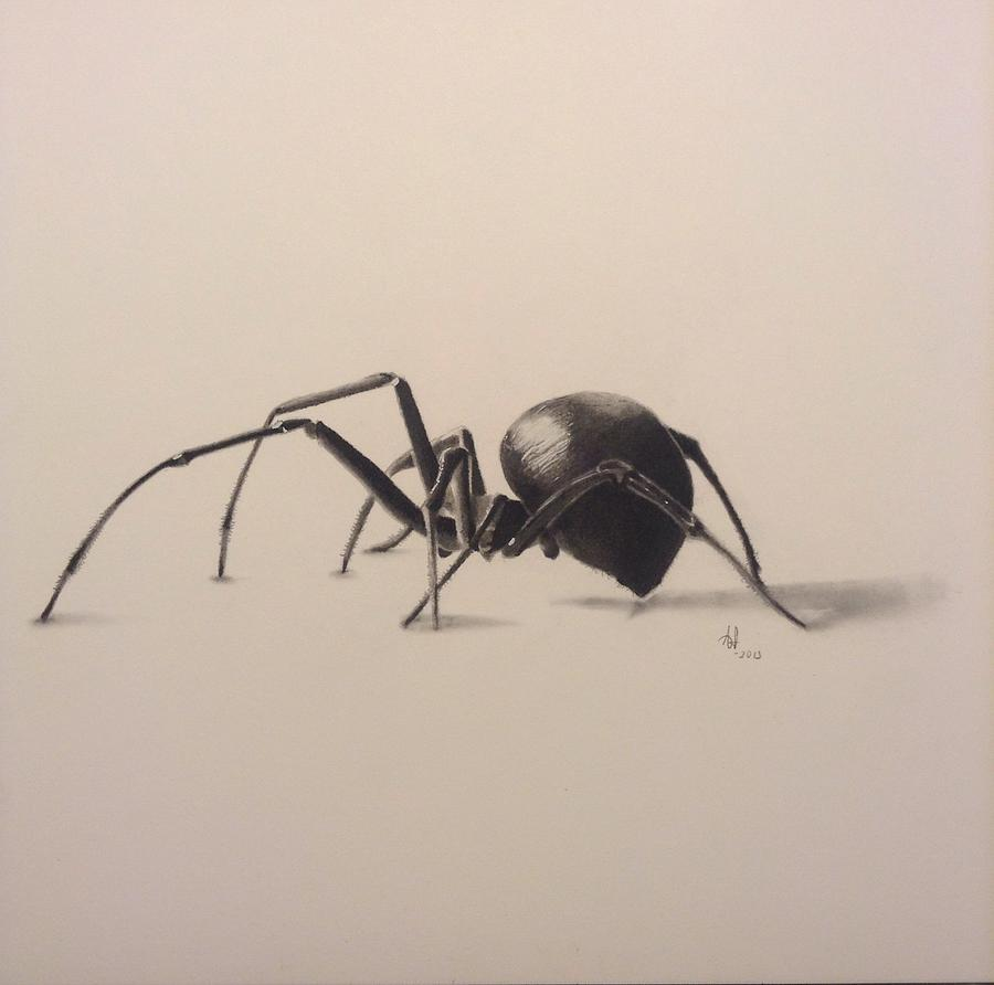 900x892 3d Spider Drawing By Aaron Ingle