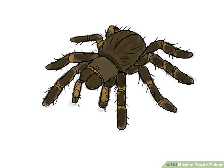 728x546 5 Ways To Draw A Spider